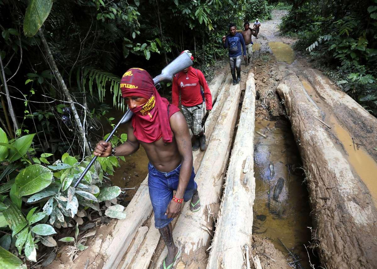 Пора в путь-дорогу вглубь амазонских дебрей