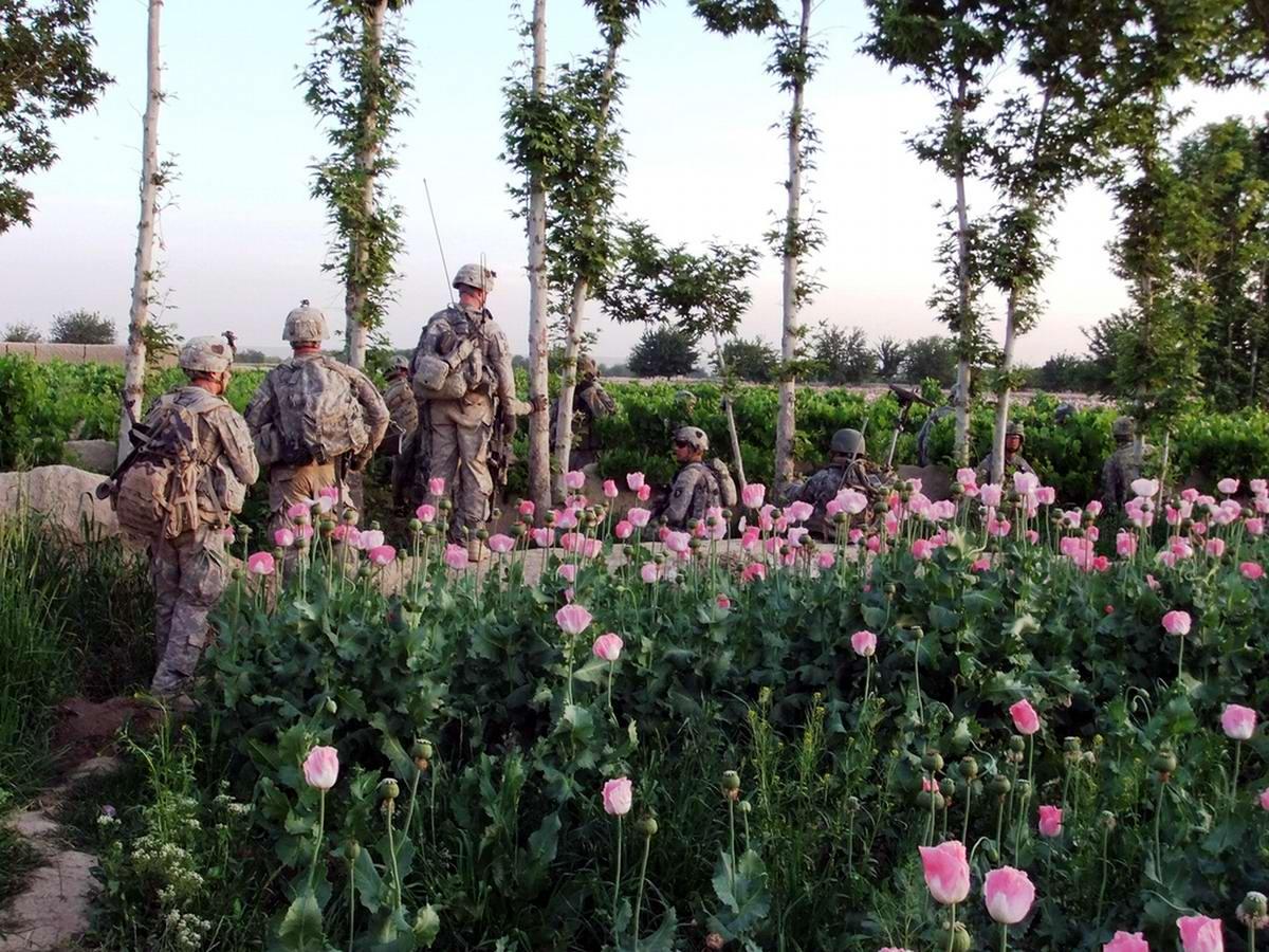 Посреди маковых полей Афганистана - фотографии военнослужащих корпуса морской пехоты США (4)