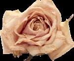 Vintage_Roses_Lilas_el (33).png