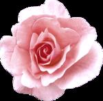 Vintage_Roses_Lilas_el (41).png