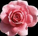 Vintage_Roses_Lilas_el (42).png