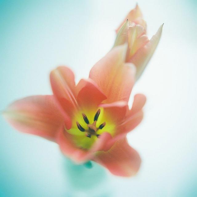 Send no flowers, Kumiko Sekiguchi80.jpg