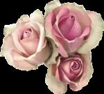 MagicalReality_VinMem1_pink roses1.png