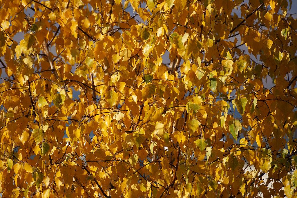 В Златоусте наступила осень