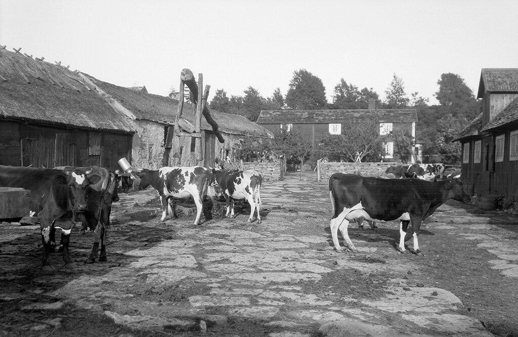 Kalmar, Mörbylånga, Torslunda, Öland, Byggnader-Jordbruk-Bondgård, Övrigt-Djur