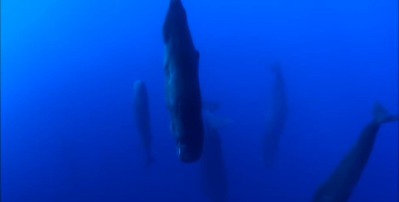 кашалоты спят под водой