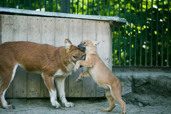 Бэби-бум в Новосибирском зоопарb50ке. 25 препозитивнейших фото