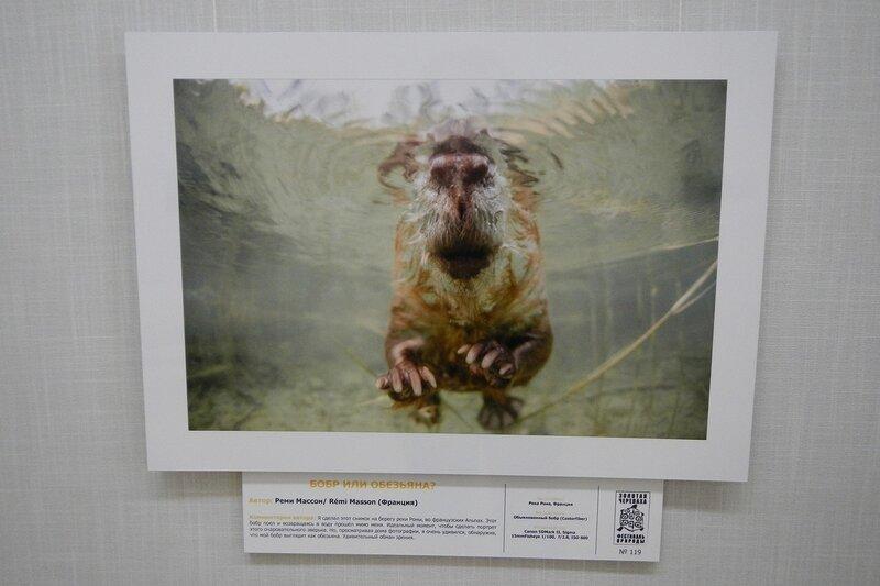 Бобр или обезьяна? Реми Массон (Франция). На фестивале дикой природы Золотая Черепаха