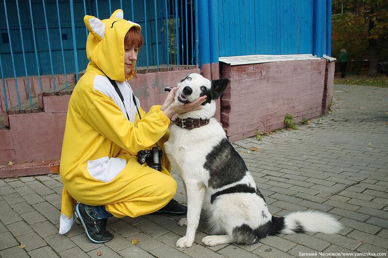 Осень. Фестивальный парк. Собаки. 04.10.14.26..jpg