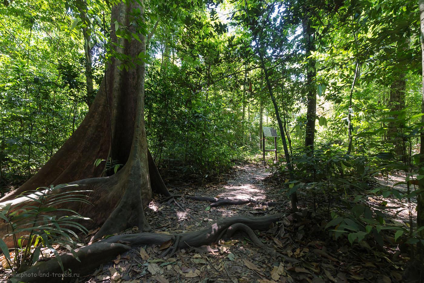 Фотография 20. Деревце в джунглях Таиланда. Отчет о поездке в Краби на машине. Рассказы, что можно посмотреть самостоятельно (800, 14, 8.0, 1/25)