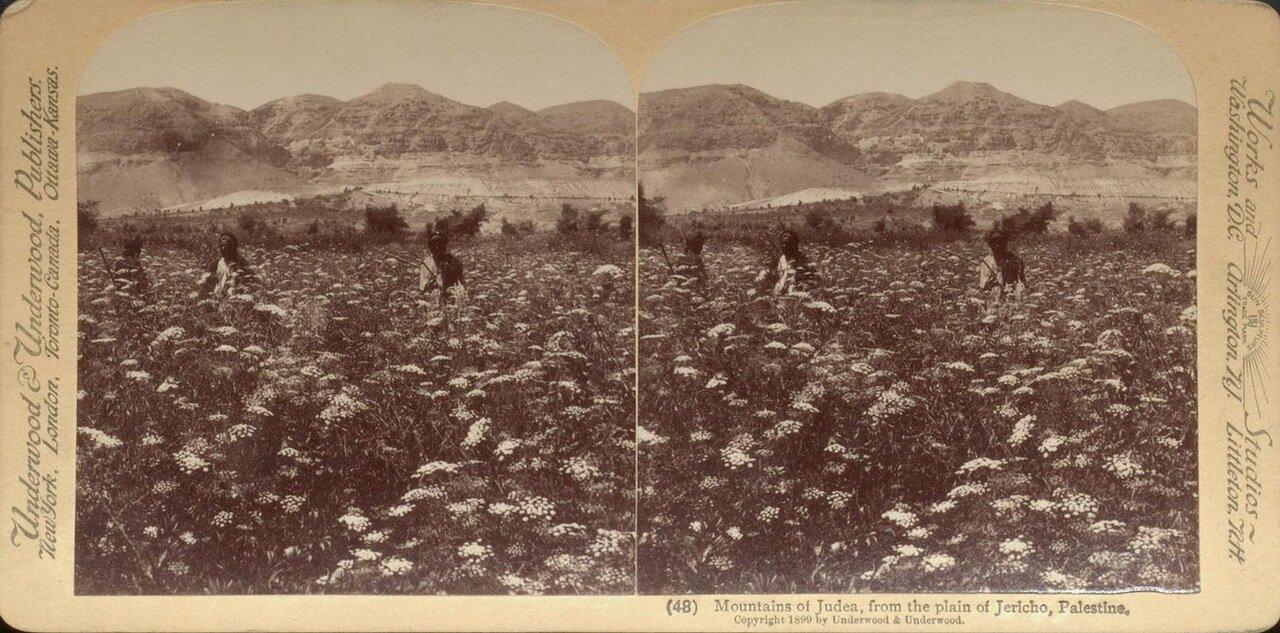 Иудейские горы, вид из Иерихонской долины. 1899
