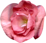 Vintage_Roses_Lilas_el (39).png