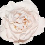 Vintage_Roses_Lilas_el (46).png