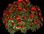 цветы (99).png