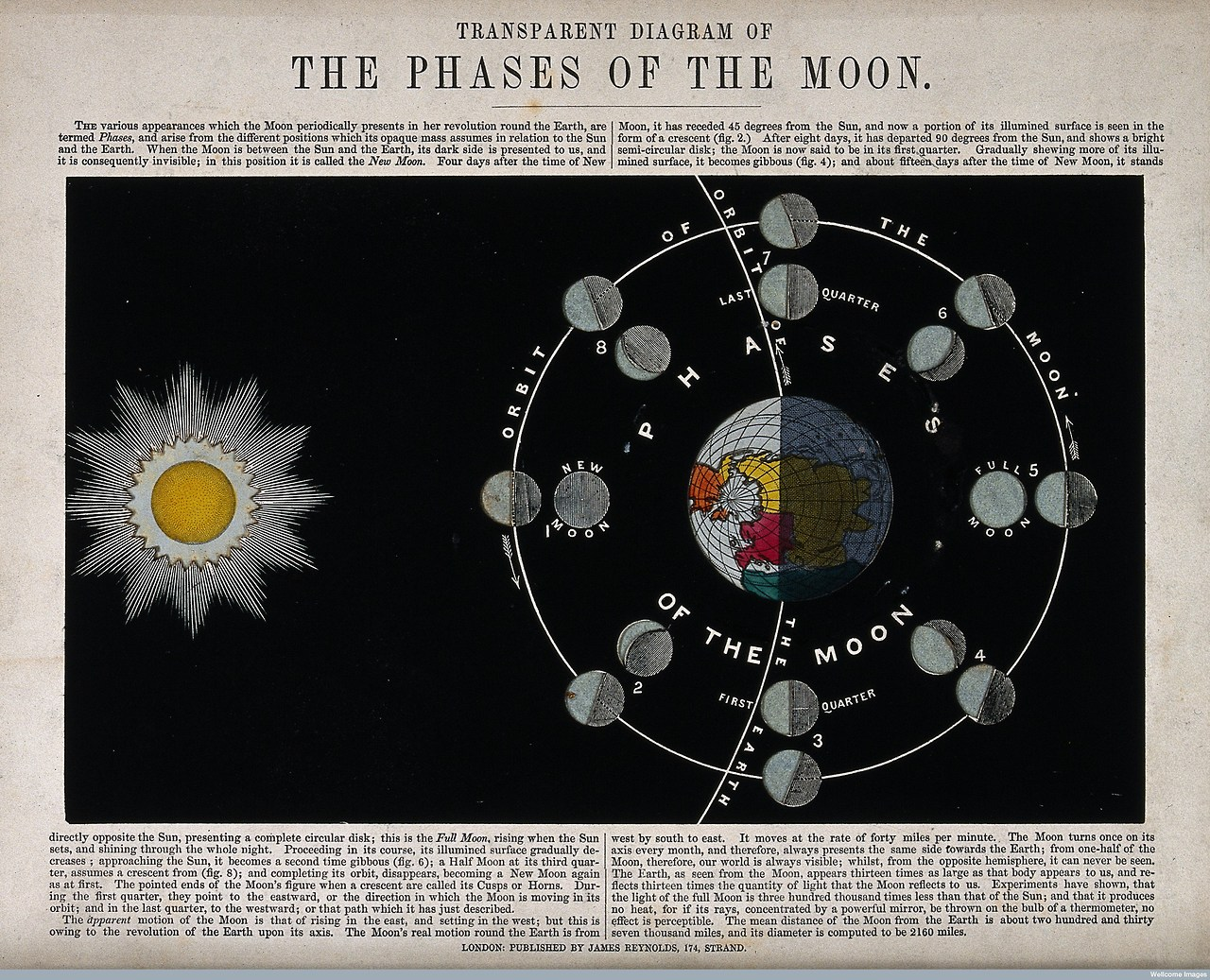 V0025021 Astronomy: a translucent diagram of the phases of the Moon.