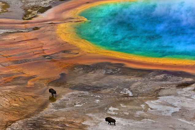 The Best Biology Photos Of 2014 Will Take You To Another World0.jpg