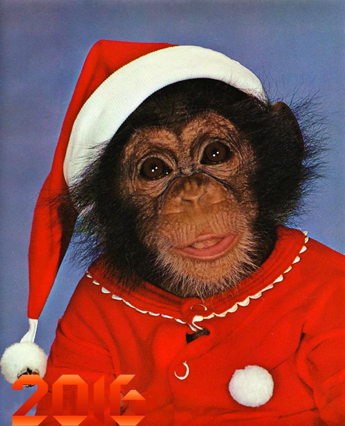 нарядная обезьянка картинки глубине веков великобритании