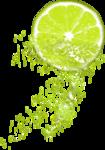 Lemony-freshness_elmt (50)b.png