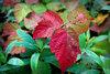 Догорает в листьях осень
