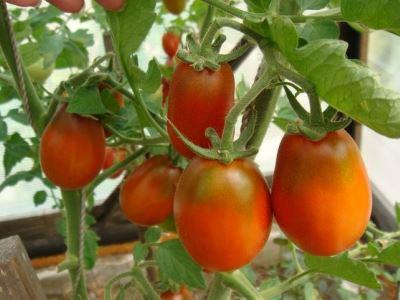 выращивание растений в теплице
