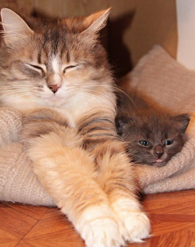 Я - маленький котенок.Я - серенький чертенок.