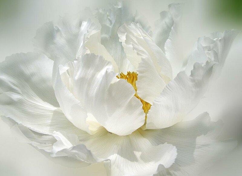Цветы- остатки  Рая на Земле