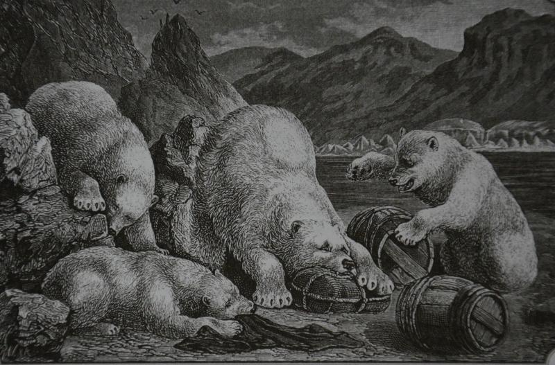 белые медведи грабятэ.jpg