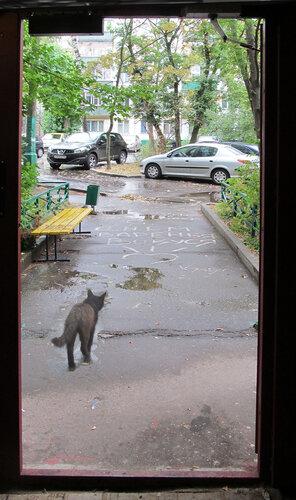 кошка под дождём.jpg
