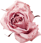 Vintage_Roses_Lilas_el (34).png