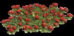 цветы (104).png