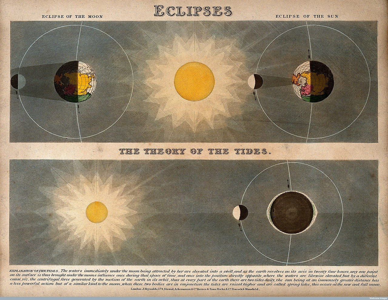 V0025022 Astronomy: diagrams of eclipses (top), and the Moon\'s passag
