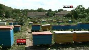 В Молдове после обработки садов химикатами гибнут пчёлы