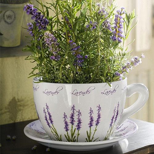 Чайные травы в вашем саду-лаванда