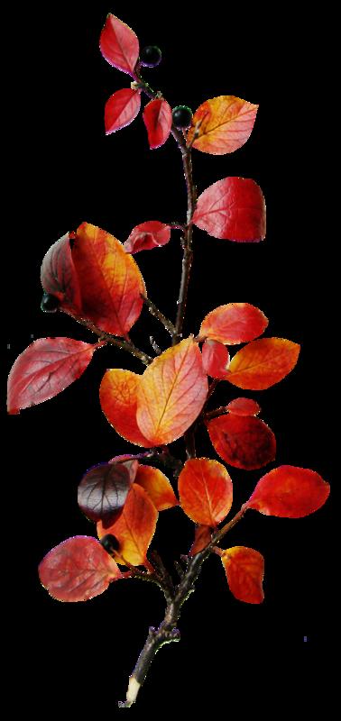 sarayane_autumnfeeling (47).png