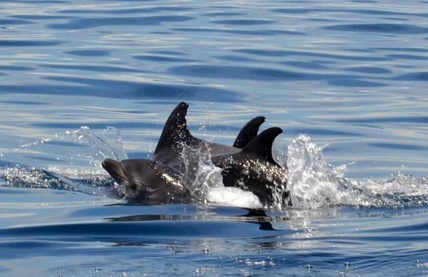 Дельфины у побережья Венесуэлы. Красивые фотографии