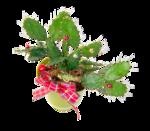 cactus (19).png