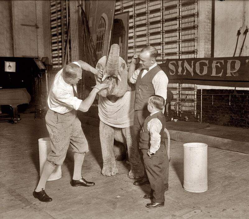 Baby Elephant Dentist: 1924
