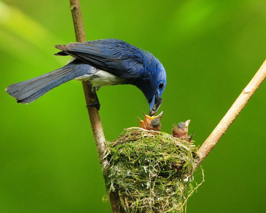 Сказочный птичий лес
