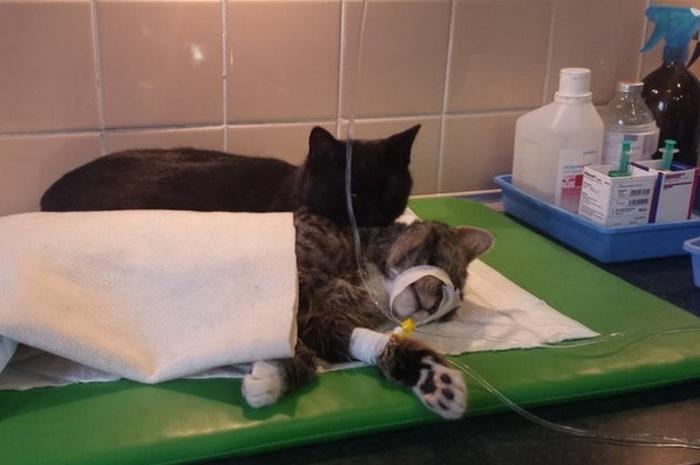 Четвероногий санитар приюта для животных