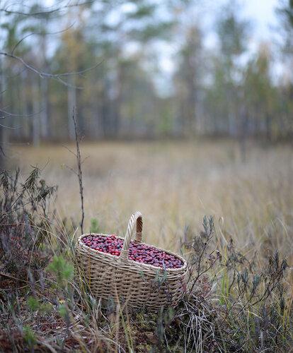 Клюква болотная (Oxycoccus palustris) Автор фото: Владимир Брюхов
