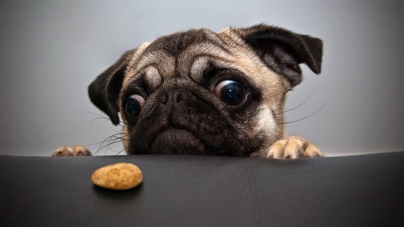 hungry-dog.jpg