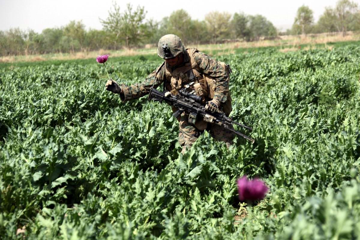 Посреди маковых полей Афганистана - фотографии военнослужащих корпуса морской пехоты США (21)