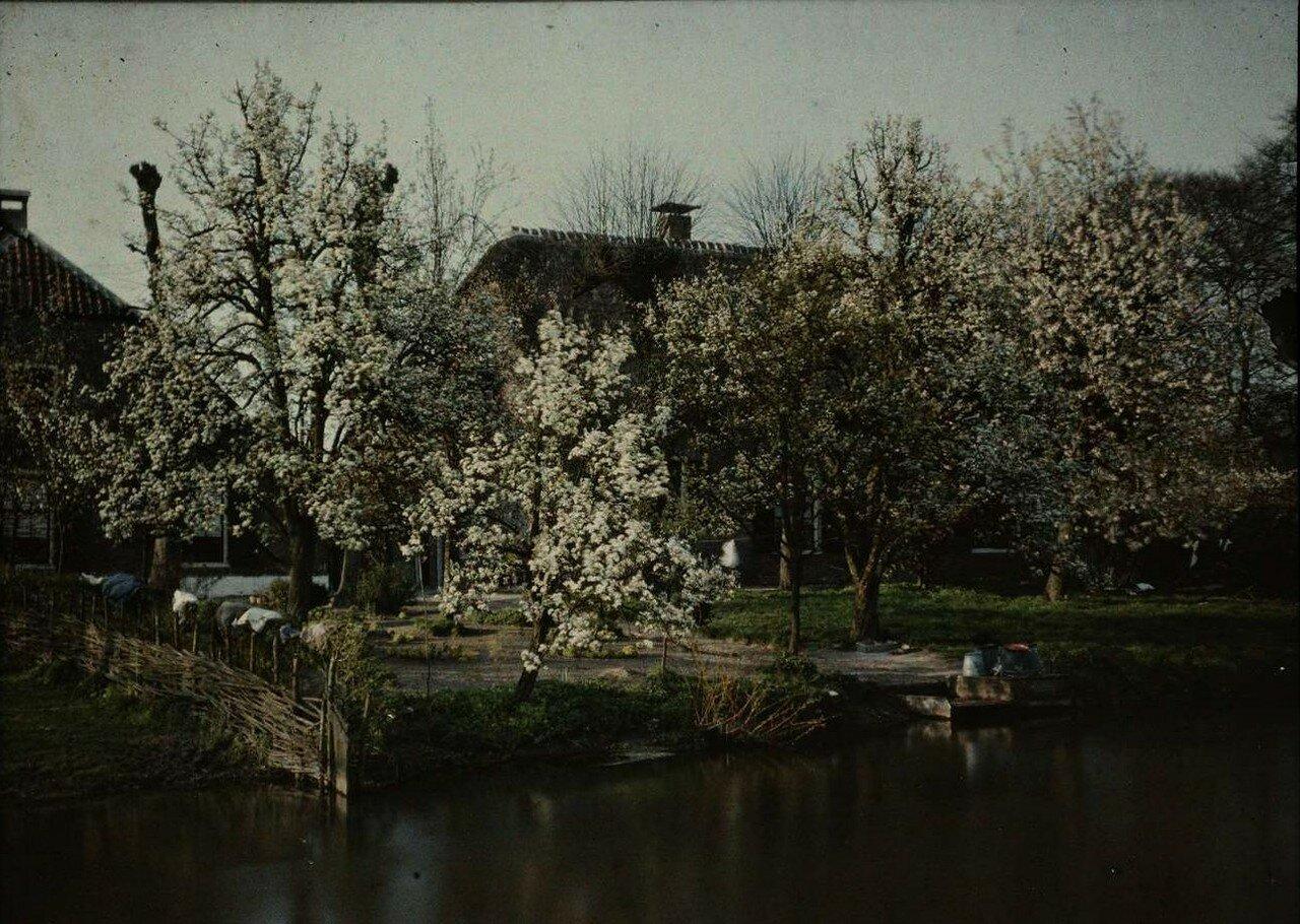 1913. Вид сада возле фермы у канала. Нидерланды