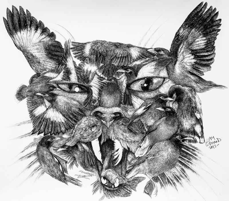 Animal Kingdom, Liam Gerrard.jpg