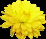 Lemony-freshness_elmt (34).png