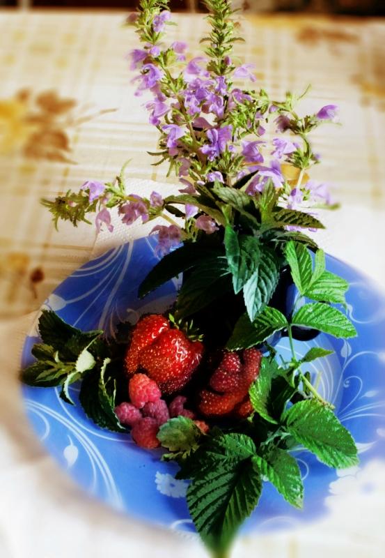 Чайные травы в вашем саду-сбор трав