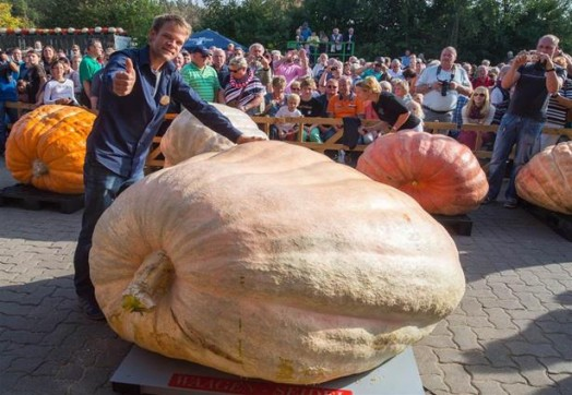 Швейцарский фермер вырастил самую большую тыкву в мире 0 12d14d 38a76eb3 orig