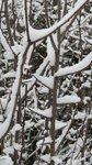 298.JPG Ушедший снег.