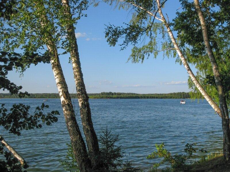 Березы на берегу, Пяловское водохранилище