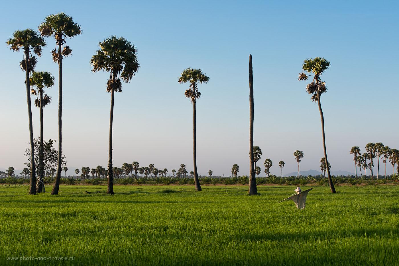 Фото 1. Пугало в Таиланде. Окрестности города Хуахин. Отчет о самостоятельной поездке (камераNikonD610, объективNikkor70-300, светочувствительность 200, фокусное расстояние 70 мм, диафрагмаf/10.0, выдержка 1/160 секунды)